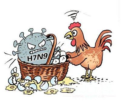 禽流感症状与感冒区别 正确了解禽流感救命才