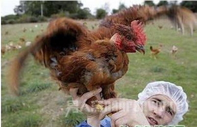 h7n9禽流感传播途径   近几年,从欧洲的禽流感侵袭了中国之后,每逢秋冬总有不少的人感染,这是比非典还要厉害的病毒,多年来一直人心惶惶。h7n9禽流感相关知识早些了解,对人对已都有益。那么,h7n9禽流感传播途径有哪些呢?  H7N9禽流感的易感动物有哪些   一、H7N9禽流感的易感动物有哪些?