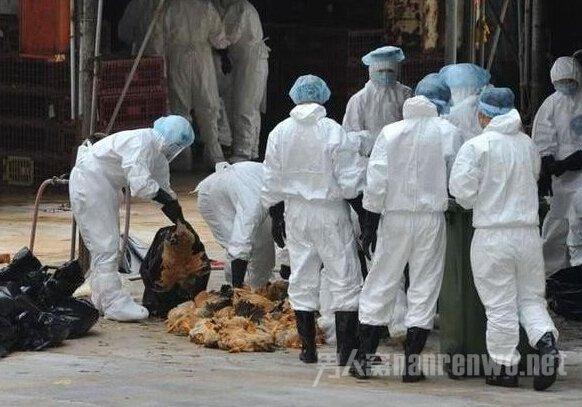 h7n9禽流感传播途径 h7n9禽流感知识早知道早
