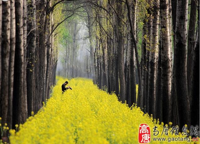 高唐清平国家生态公园获批国家生态公园和专类园建设