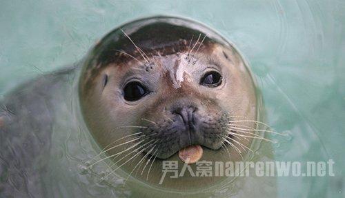 海豹鼠标接线头顺序