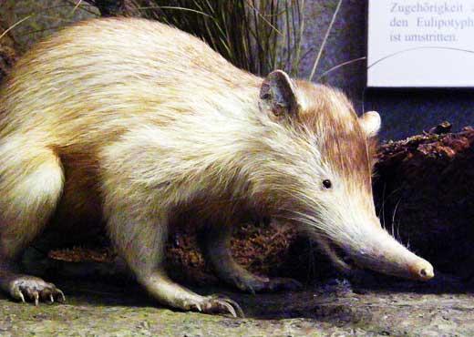 全球奇葩动物大盘点:双头猪简直活